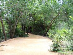 The magical Auroville Asharam