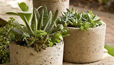 Mom always loves a gift that you make. Create rustic, textured containers from a mixture of Portland cement, perlite (or vermiculite), and water. Once you master this technique, you can make containers in any size.