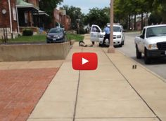 Cell Phone Video Emerges That Refutes St. Louis Cops Version of Shooting