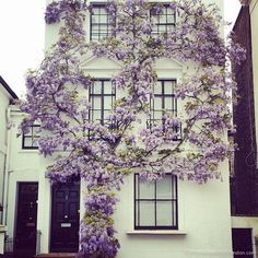 Prettiest Houses in London – These are the Best House with Wisteria in Kensington. Rendered facade offset with bright flowers growing up the building Exterior Design, Interior And Exterior, Exterior Colors, Exterior Paint, Bright Flowers, House Front, Wisteria, Architecture, My Dream Home