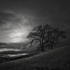 two trees on a hill  by Nathan Wirth, via 500px.