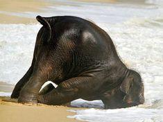 hungover-animals-13.jpg