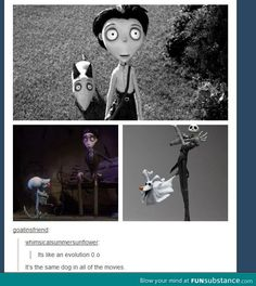 Except opposite order of the photos. Nightmare, Corpse Bride, then Frankenweenie. He made the dog evolve into something living instead of stages of death. The man's a genius.
