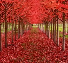 Maple Tree Tunnel in Oregon Not only are these maple trees magnificent, but they make up one of the most amazing tree tunnels you can walk. Beautiful Landscape Photography, Autumn Photography, Landscape Photos, Beautiful Landscapes, Color Photography, Learn Photography, Tree Photography, Photography Gallery, Amazing Photography