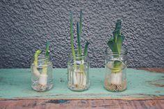 """Das Thema Regrowing wird langsam aber sicher wieder aktuell. Früher war es gang und gebe, dass man """"Pflanzenreste"""" von Obst und Gemüse nachwachsen lässt, doch über die Jahre ist es in Vergessenheit geraten. Dabei ist es nicht nur nachhaltig die Reste zu recyceln und nicht in den Müll zu schmeißen. Es macht auch noch Spaß zuzusehen wie aus einem übrig gebliebenen Strunk oder einem Stück Knolle eine ganz neue Pflanze wächst, von der oder die man selbst nochmals ernten kann. Sustainability, Glass Vase, Lifestyle, Fruit And Veg, Recyle, Sustainable Development"""