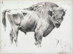 Wilhelm Kuhnert      Bison   The Coeur d'Alene Art Auction