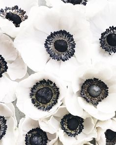 French anemone is just too beautiful isn't it? Mass of flowers. Black and white flowers. Deco Floral, Floral Design, Bouquet Champetre, Anemone Flower, Anemone Bouquet, White Anemone, Ranunculus, My Secret Garden, Beautiful Flowers