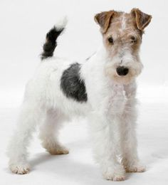 """It's very much like our WFT terrier as a puppy. Also, have you noted that a WFT is an anagram for both """"WTF"""" AND """"FTW"""".:"""