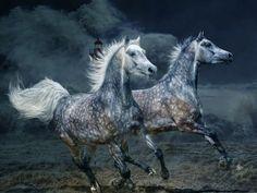 Les fonds d'écran - Deux chevaux gris au galop