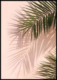 Pink palm tree wallpaper pink palm wallpaper pink palm poster in Poster Mural, Poster Prints, Poster Poster, Poster Wall, Murs Roses, Gold Poster, Buy Posters Online, Prints Online, Wall Art
