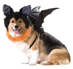 Don't forget about your pets this Halloween season! Here are some of our favorite Halloween costumes for your furry friend! | Living TRUE