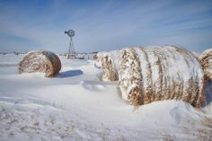Kansas Frosted Mini-Wheats; Kansas Wildlife & Nature Photography; photo by Chris Harris