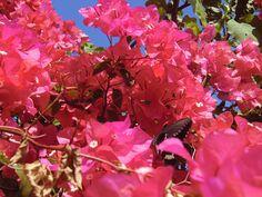 9/21(水)バリ島ウブドのお天気は晴れ。室内温度29.4℃、湿度71%。これでもか!!と言うほどの極彩色。蝶も美しい色に誘われてきました。南国ならではの色彩です。
