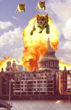 Cat Attack @elliothoffman