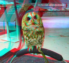 Owl wondering how my logo is floating in mid air @ the Wheels and wings show (3d view with red/blue glasses)