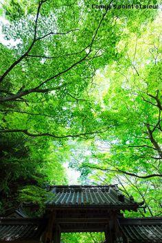 Shiga, Japan   Matsuoka Comyu 新緑燃える