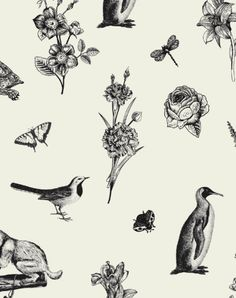 Darwin's Townhouse - Brand Identity & Photography In Shropshire Stunning Photography, Black And White Illustration, Darwin, Brand Identity, Townhouse, Tattoos, Creative, Art, Art Background