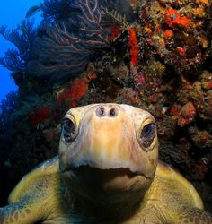 Aliens Underwater - A Close Head Shot of a Loggerhead Turtle Photo and caption by Cindy Messinger @Smithsonian Magazine