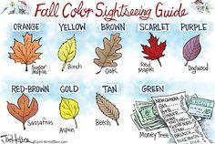 KEEP IT SIMPLE... | Oct/01/15 Joe Heller - Green Bay Press-Gazette - Fall Colors