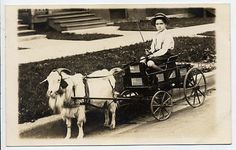 vintage goat cart photos | Today's Treasure by Jen: Antique Goat Cart Yesterday & Today