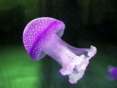 jellyfish, what are you doing? you look like a mushroom!?!
