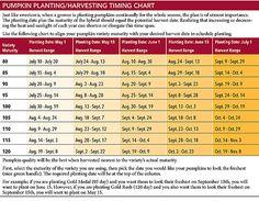 Pumpkin Varieties, Planting Pumpkins, Harvest Time, How To Plan, Squash Varieties
