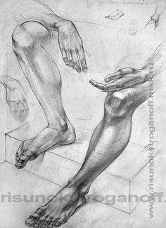 26.Нога (голень и стопа)
