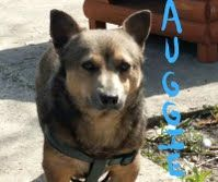 Auggie was put to sleep. Not enough room and not enough time. May he rest in peace.