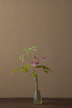 2012年5月17日(木)   名は花のかたちから。漢方では茎葉を強壮薬に用います。   花=碇草(イカリソウ)   器=ローマングラス瓶(ローマ時代)