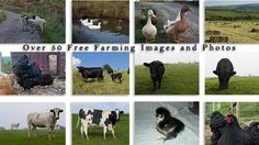 Are you looking for free farming or wildlife images for your website or blog? Then look no further. Click here to download over 50 farm pictures for free Farm Pictures, Animal Pictures, Agriculture, Farming, Free Images For Blogs, Urban Farmer, Over 50, Farm Animals, Homestead