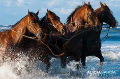 ¡Mi reino por un caballo! #Holland #horses #caballos