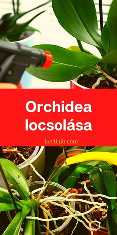 Orchids, Herbs, Gardening, Plant, Lawn And Garden, Herb, Horticulture, Orchid, Medicinal Plants