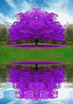 Cheap blue maple, Buy Quality japanese maple directly from China japanese maple seeds Suppliers: Rare Blue Maple Seeds Maple Seeds Bonsai Tree Plants Potted Garden Japanese Maple Seeds 10 Pieces / lot Beautiful Nature Wallpaper, Beautiful Landscapes, Beautiful Gardens, Beautiful Images, Beautiful Flowers Pics, Unique Trees, Colorful Trees, Nature Tree, Flowers Nature