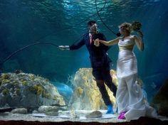 Galerie 24h - Un couple dans l'aquarium de Benalmadena pour son mariage, le 6 août 2012.