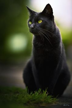 Black #Cat with green eyes
