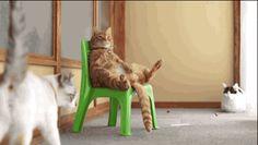 notez le chat du fond qui aurait clairement besoin de se faire retailler la frange