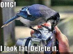 """Blue Jay admiring camera - """"Can I See?"""" by Katherine Clifton Pretty Birds, Beautiful Birds, Louise Hay Libros, Animal Pictures, Funny Pictures, Funny Animals, Cute Animals, Talking Animals, Baby Animals"""