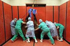 A thoroughbred horse is hoisted by its feet after receiving anesthesia prior to an operation at the Newmarket Equine Hospital, March 2, 2011. The hospital provides care for horses from all over the world.