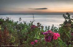 #ireland #irelandaily #sun #vogue #alesiabphotography #all_shots #camera #sony_camera #architecture #lovindublin #lovedublin #lonelyplanet #streetphotography #streets #photographer #vsco #naturephotography #view #visitireland #discoverireland #art #dublin #travel #lovetravelling #instadaily #trip #vacation #nature #instadaily #city #dublinphotographer http://tipsrazzi.com/ipost/1504713102887826321/?code=BTh0JhCgTOR