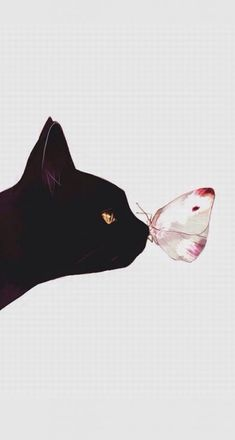 Black cat and a butterfly Wallpaper Gatos, Tier Wallpaper, Animal Wallpaper, Cat Phone Wallpaper, Black Wallpaper, Butterfly Wallpaper Iphone, Cute Cat Wallpaper, Drawing Wallpaper, Wallpaper Wallpapers