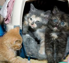 5 Steps to Saving Feral Kittens
