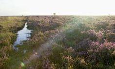Wandelroute Norger Esdorpenlandschap in Norg, vlakbij Assen | Natuurmonumenten