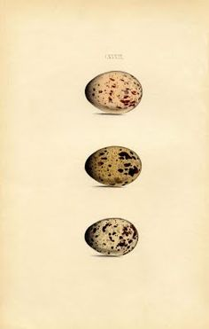 Instant Art Printable - Morris Egg Print - Natural History - The Graphics Fairy