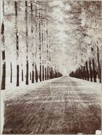 Tsarskoe Selo drive in winter.  Beautiful.