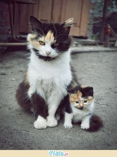 Kocie rodzinki