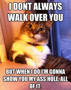 Anyone has ever owned a cat knows what this is like.