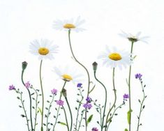 White background in the Flora photography