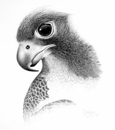 pencil sketch art designs PHotos : Pencil Sketches Of Fairies Photos Wallpapers Images Pics Collections Pencil Sketches Of Animals, Cool Pencil Drawings, Amazing Drawings, Bird Drawings, Animal Drawings, Amazing Art, Amazing Things, Shading Drawing, Realistic Eye Drawing