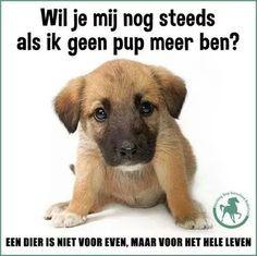 46 Beste Afbeeldingen Van Facebook Plaatjes Dutch Quotes