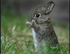 OMG such a cute wild baby bunny!